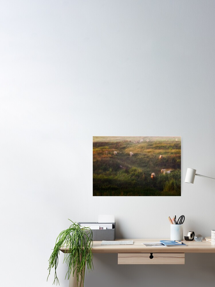 Alternate view of The cows Poster