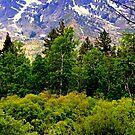 """""""Springtime In The Sierras"""" by Lynn Bawden"""