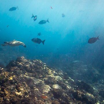 Flinders Reef - mug shot by KaraMurphy