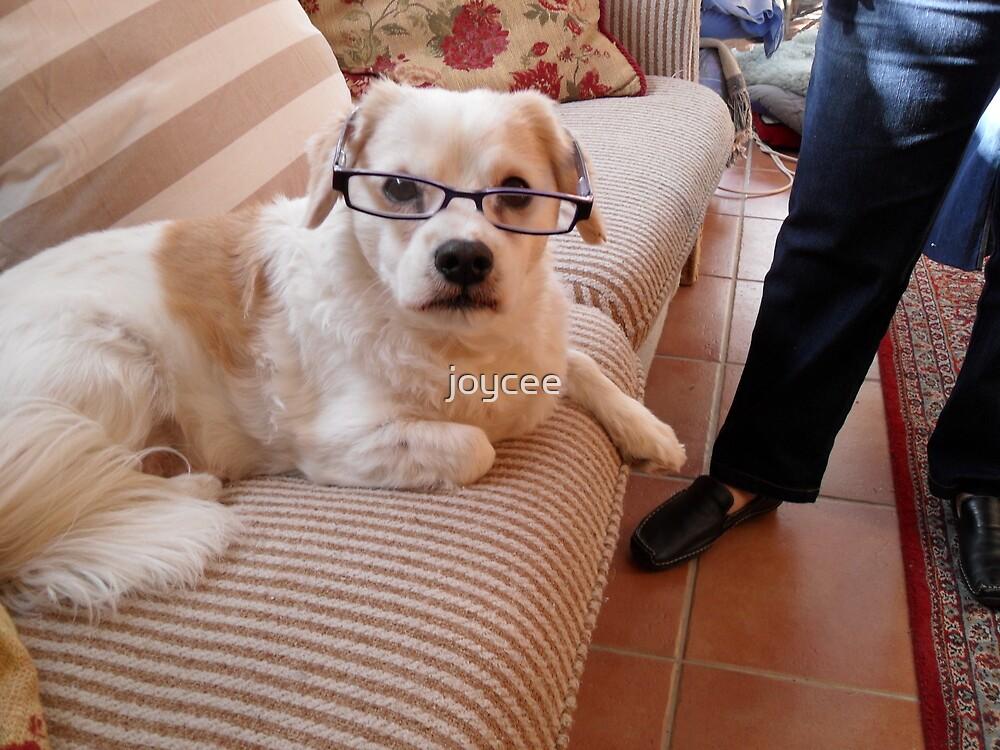 Toby caught wearing my glasses by joycee