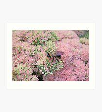 Bumble Bee on Autumn Joy Sedum Art Print