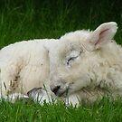 sleepy little lamb by monkeyferret