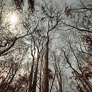 La Forêt by laurentlesax