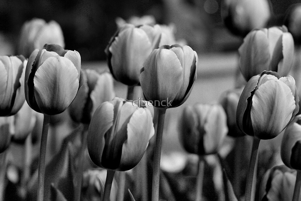 Black and White Tulips with Curved Stems by cjbenck