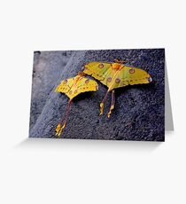 A PAIR OF COMET MOTHS Greeting Card