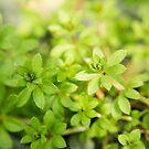 Green Garden by fruitfulart