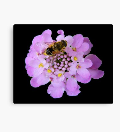 Busy Bee © Canvas Print