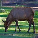 Comfy Safe And Grazing by miroslava