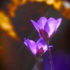 Wilde Frühlingsblume 2 von Veikko  Suikkanen
