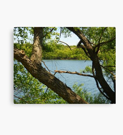 View from my perch Canvas Print