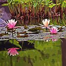 Pond of Dreams by Terri~Lynn Bealle