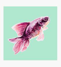 Magneta Fish on Mint  Photographic Print