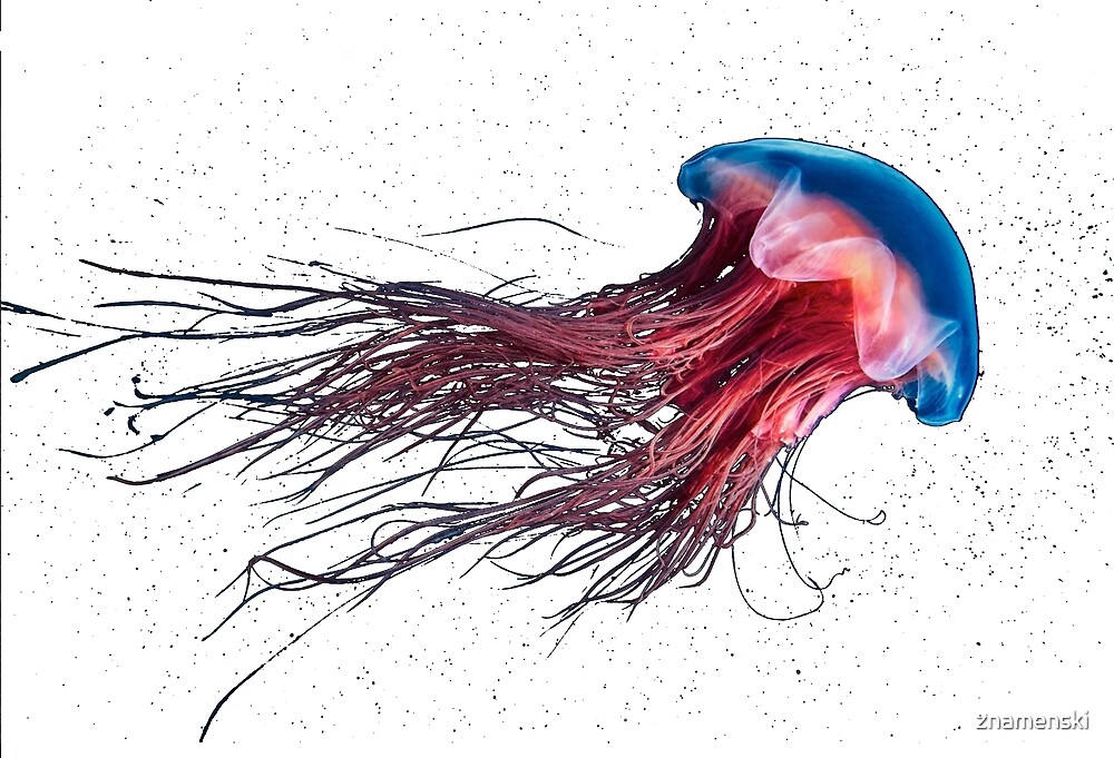 #Jellyfish #Cnidaria #Bioluminescence #Invertebrate underwater science biology fish aquarium swimming by znamenski