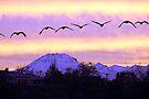 Mt Lassen sunrise. by skreklow