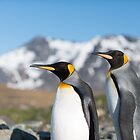 King Penguins by Mark Prior