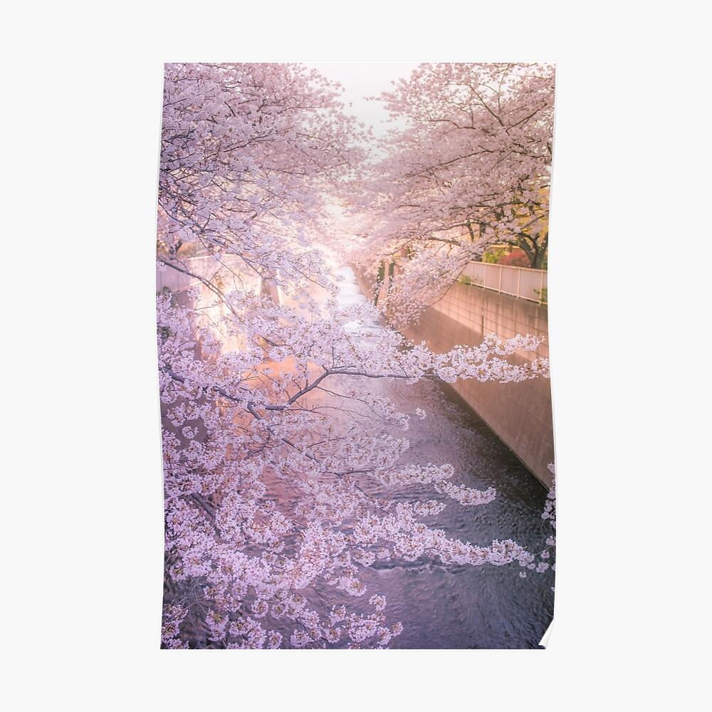 Sakura tree over Kanda Gawa river Poster