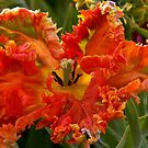 ORANGE PARROT TULIP by Johan  Nijenhuis