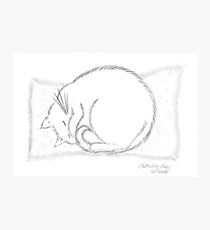 Snoozing Socks Photographic Print