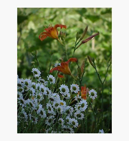 Day lilies and Daisies Photographic Print