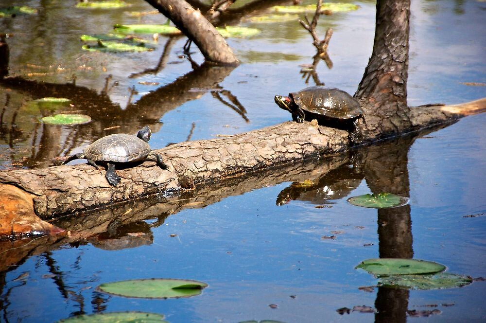 Turtles at a pond at the Houston, Texas Arboretum by Ann Reece