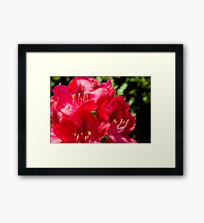 Rhododendron detail Framed Art Print