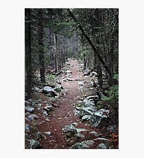 Pine Needle Path Photographic Print