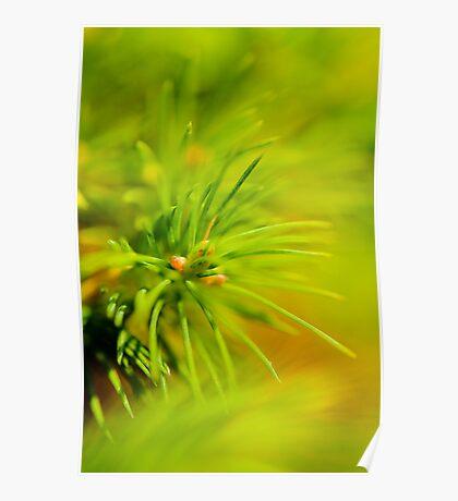 Pine Tree detail Poster