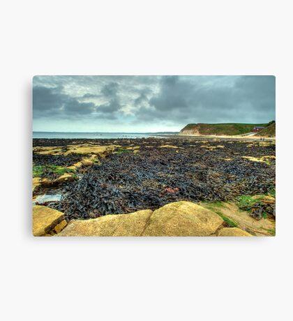 South Landing, Flamborough – looking towards Bridlington Canvas Print