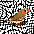 Zebra Finch by Karin Taylor