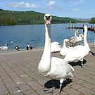 What you looking at then ?? Lake Windermere, Cumbria. by Roy  Massicks