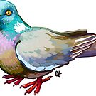 Pigeon by etall