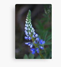 Wild Perennial Lupine Canvas Print