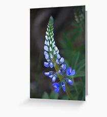 Wild Perennial Lupine Greeting Card