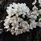 Blossoms and Bark by Mattie Bryant