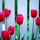Tulip Daze by Mattie Bryant