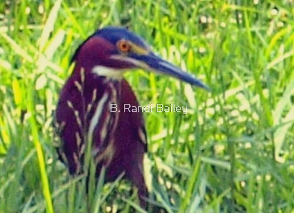 Green heron by ♥⊱ B. Randi Bailey