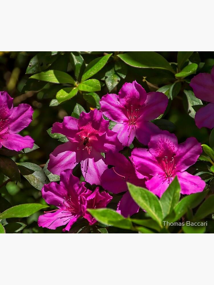 Ein paar Blumen von imagetj