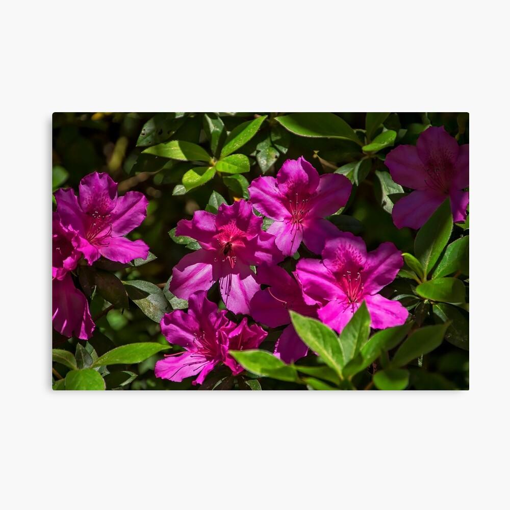 Ein paar Blumen Leinwanddruck