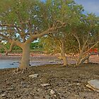 roebuck bay mangroves  by Elliot62