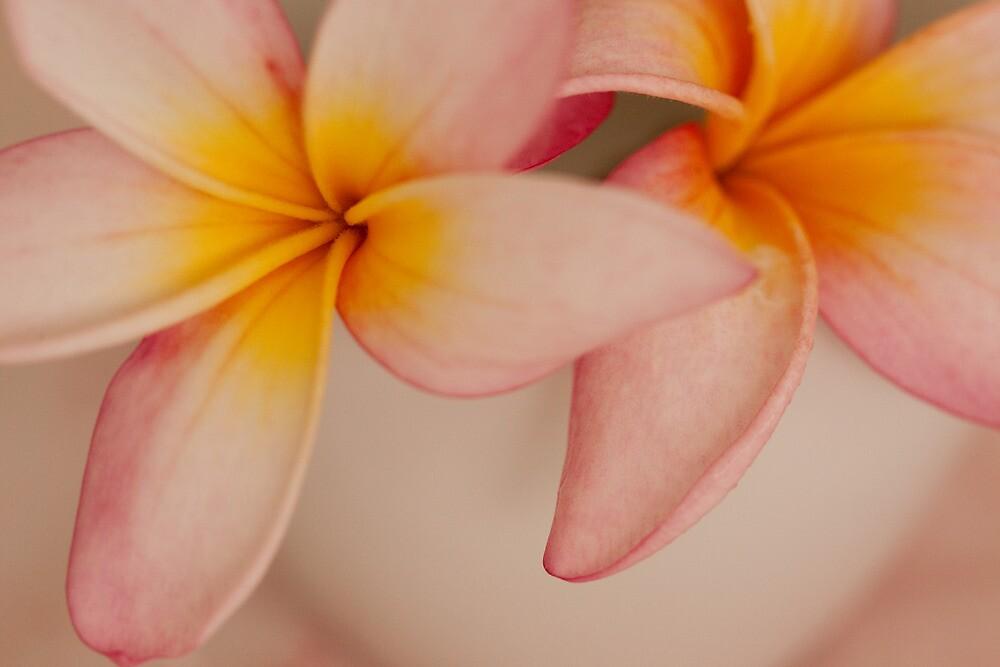 Pink Frangipanis by Mia Rose