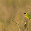 Little bee-eater by Yves Roumazeilles