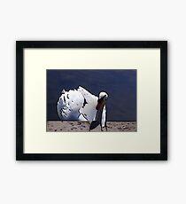 Astley Swan #1 Framed Print