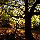 Into the woods... by Tony Lomas