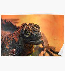 Philippine Sailfin Water Dragon (Hydrosaurus pustulatus) Poster