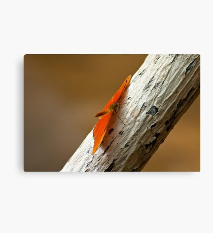 Butterfly on bark Canvas Print