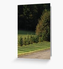Shadow Sketches, afternoon fingers of pines Greeting Card