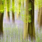 Bluebell Forest by Kasia Nowak