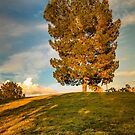 Golden Tree by George Lenz