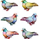 Pigeon Collection by etall
