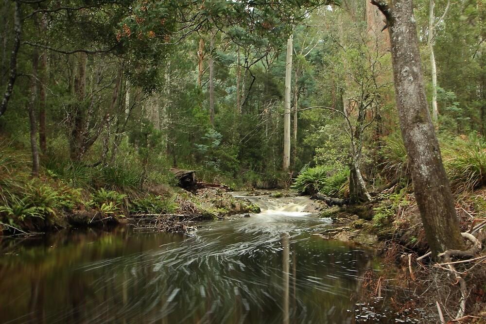 Minnow River peace by Gaylene Norton